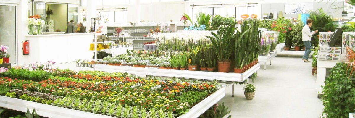 Tuincentra-Eurotuin-planten-aangepast-3x1